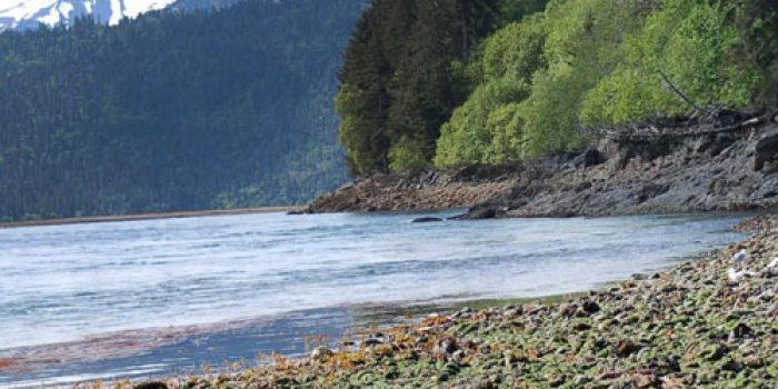 Halibut Cove Alaska